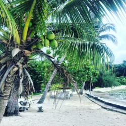 Palma před bungalovem
