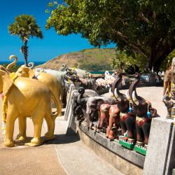 Desítky a stovky slonů na Phromthep Cape